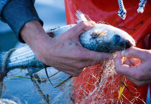 """""""Nachhaltiger"""" Fisch: Nur ein Marketing-Gag?"""